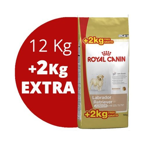 ROYAL CANIN LABRADOR JUNIOR 12+2KG GRATIS